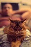 Katt som ligger på varv arkivbild
