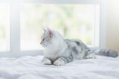 Katt som ligger på vit säng Royaltyfria Bilder