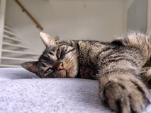 Katt som ligger p? en soffa royaltyfria bilder