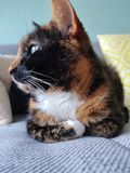 Katt som ligger p? en soffa royaltyfri fotografi