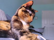 Katt som ligger p? en soffa arkivfoton