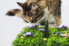 Katt som luktar den konstgjorda blomman Arkivbild