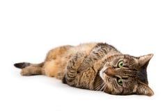 Katt som ner ligger Royaltyfria Foton