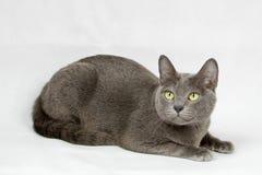 Katt som ner ligger på vit bakgrund Arkivfoto