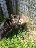 Katt som omkring ser Arkivbilder