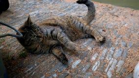 Katt som palying med hunden utanför arkivfilmer