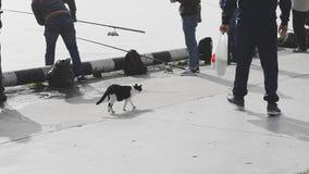 Katt som patrullerar fiskare stock video
