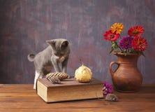 Katt som poserar bredvid blommor i en vas Royaltyfri Foto