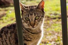 Katt som ser bak ett staket arkivfoton