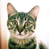 Katt som ser dig Arkivbild