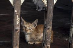 katt som ser dig Fotografering för Bildbyråer