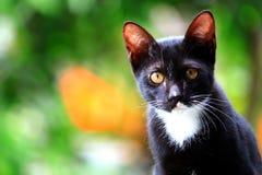 katt som ser dig Arkivbilder