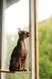 Katt som ser fönstret Arkivfoto