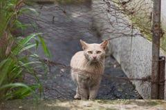 Katt som ser från staketet Arkivbild