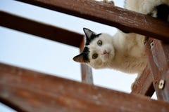 katt som ser ner Fotografering för Bildbyråer