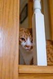 Katt som ser till och med räcket Royaltyfri Bild