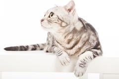 Katt som ser upp Royaltyfri Foto