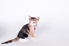 katt som ser upp Fotografering för Bildbyråer