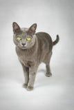 katt som ser upp Royaltyfria Bilder