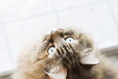 katt som ser upp Royaltyfri Bild