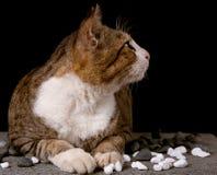 Katt som ser upp med svart bakgrund Arkivbilder