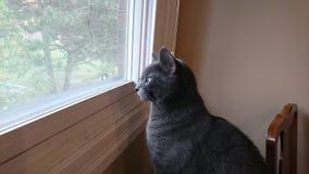 Katt som ser ut ur ett fönster Royaltyfri Bild