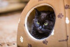 Katt som ser ut ur hans hus Arkivfoton