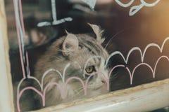 Katt som ser ut ur signal för fönstertappningfärg Royaltyfri Fotografi