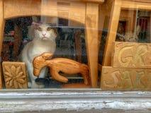 Katt som sitter bak fönstret som ser utvändigt arkivbilder