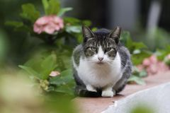 Katt som sitter i trädgården som ser direkt på kameran royaltyfri fotografi