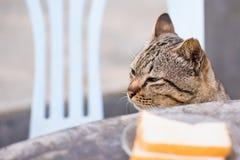 Katt som sitter utomhus att se upp f?r mat i morgonen thailand royaltyfri fotografi