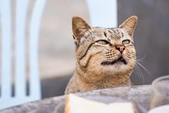 Katt som sitter utomhus att se upp f?r mat i morgonen thailand arkivbild