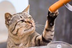 Katt som sitter utomhus att se upp f?r mat i morgonen thailand arkivfoto