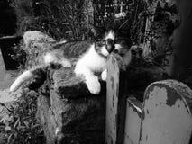 Katt som sitts på väggen Royaltyfri Fotografi