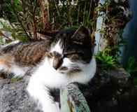 Katt som sitts på väggen Fotografering för Bildbyråer