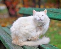 Katt som skrapar en tafsa fotografering för bildbyråer