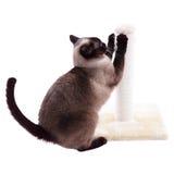 Katt som skrapar stolpen Arkivbilder