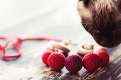 Katt som sniffar rempärlor arkivfoton