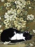 Katt som sover i farmorstol royaltyfri fotografi