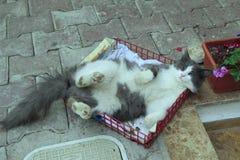 Katt som sover i korgen Arkivbilder
