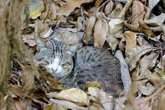 Katt som sover i ljusa höstsidor Arkivfoto