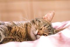 Katt som sover i säng Arkivbilder