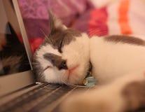 Katt som sover på den öppna bärbara datorn Royaltyfria Bilder