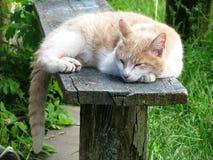 Katt som sover på en bänk Fotografering för Bildbyråer