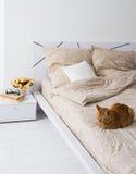 Katt som sover på en säng Arkivfoton
