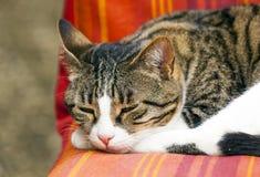 katt som sover på en soffa arkivfoto