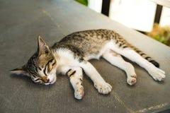 Katt som sover på golvet Arkivbild