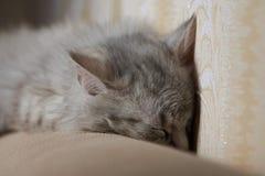 Katt som sover på soffan Royaltyfria Foton