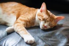 Katt som sover på stol Fotografering för Bildbyråer