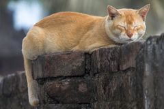 Katt som sover på väggen arkivfoto